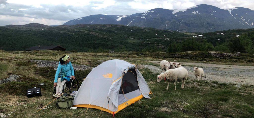 Fjellandskap. Kvinne i rullestol ved siden av et lite oppslått telt og fem sauer på besøk ved teltet.