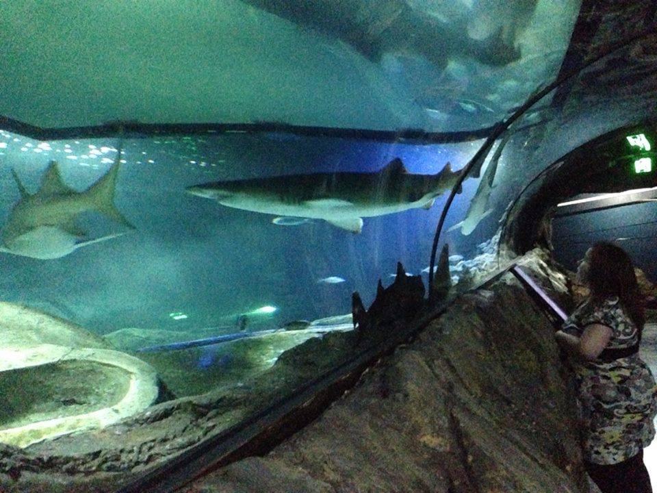 En kvinne står nede i en undervannstunnel med to haier svømmende rundt.