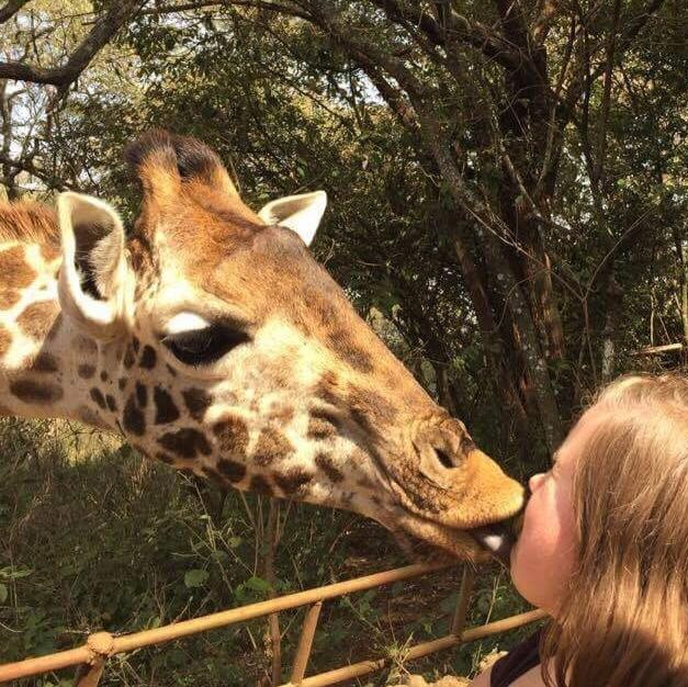 Nærbilde at at jeg kysser en giraff.