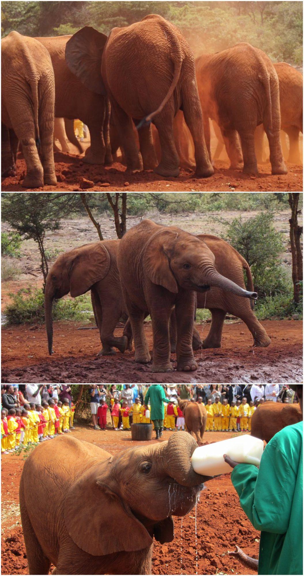 Tre bilder av små babyelefanter. Fargen minner om brun leire og sand.